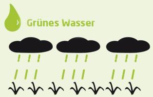 Grünes Wasser = natürlich vorkommendes Boden- und Regenwasser