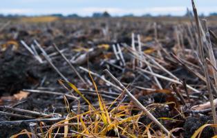 """Wo das """"Pflanzenschutzmittel"""" Glyphosat verspritzt wird, entstehen ökologische Wüsten."""